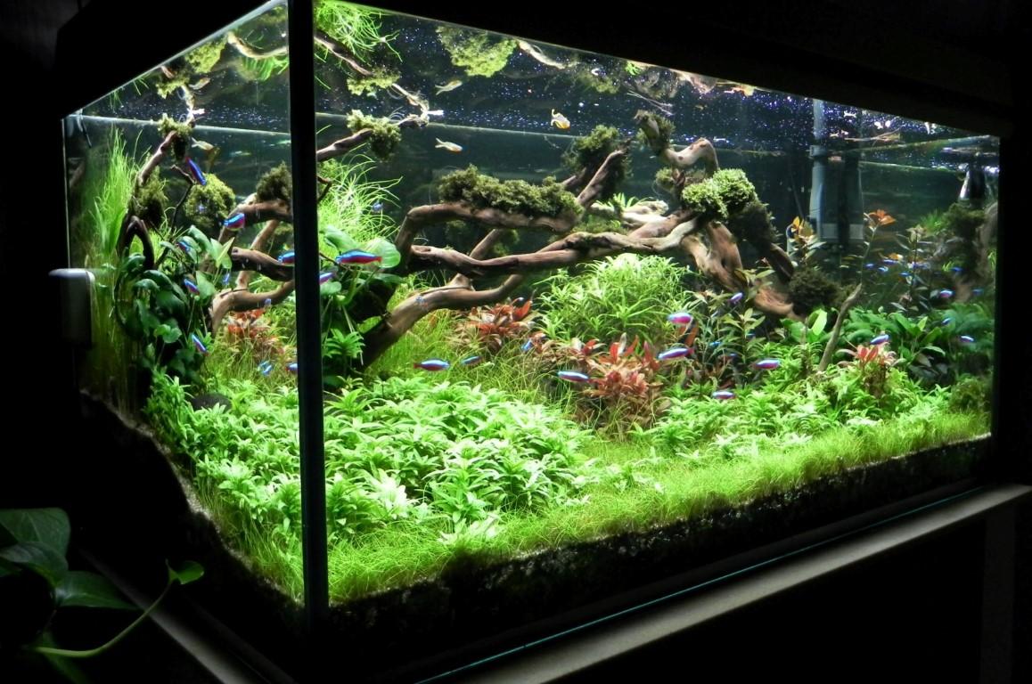 Frösche Für Aquarium Mit Fischen Fische und andere tiere