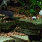 Terassen mit Algenaufwuchs
