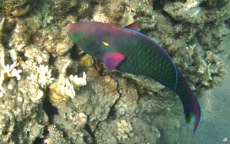 700-0d52e2fa Unique De Couvercle Aquarium Conception