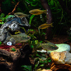 Aquarium JPL-5284