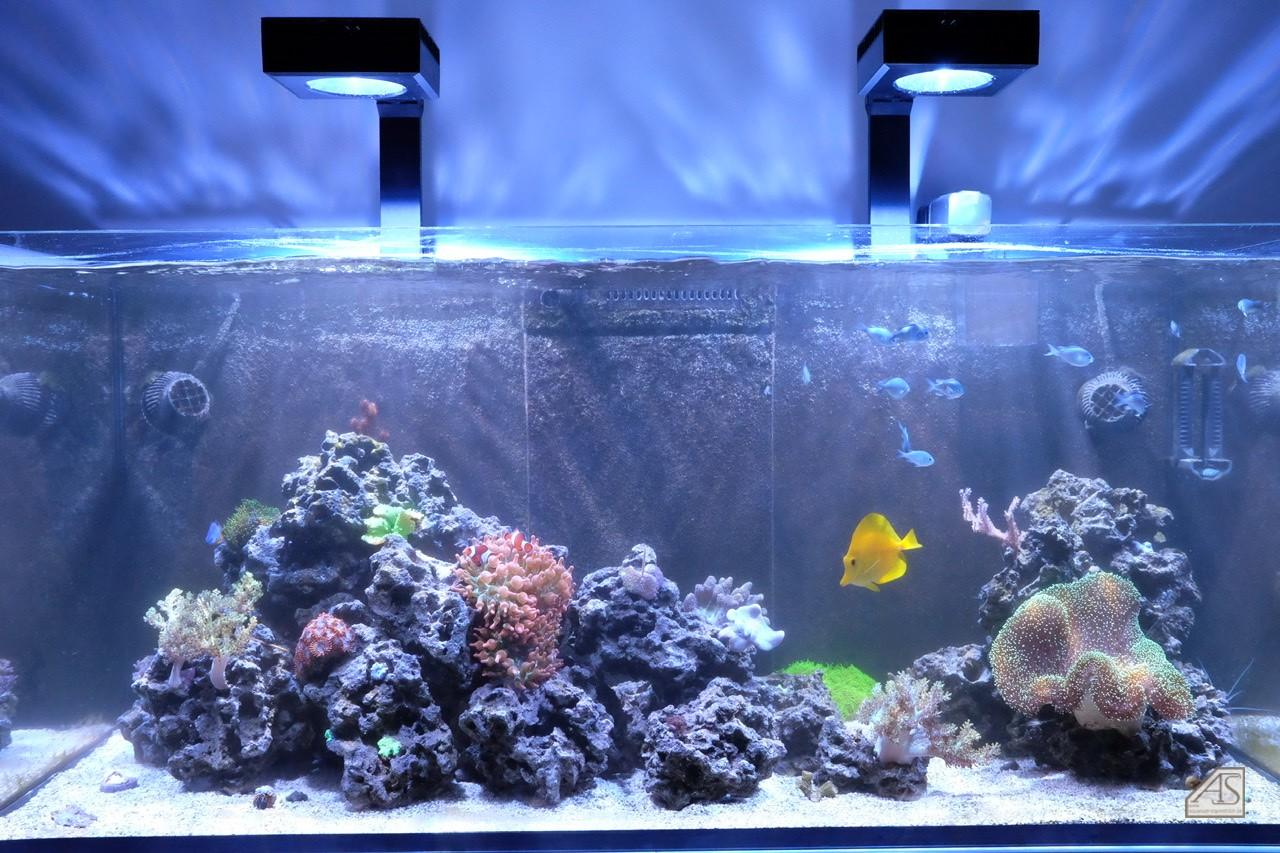 Nepo s Aquarium