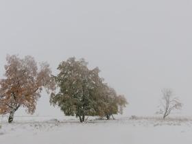 Winter im Moor.jpg