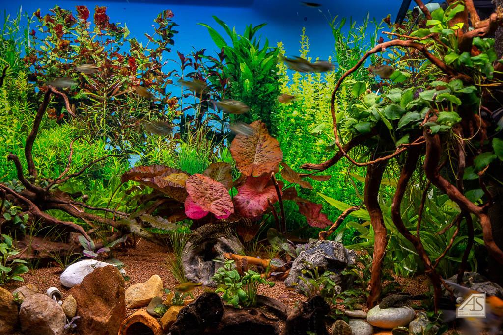 Aquarium JPL-4810