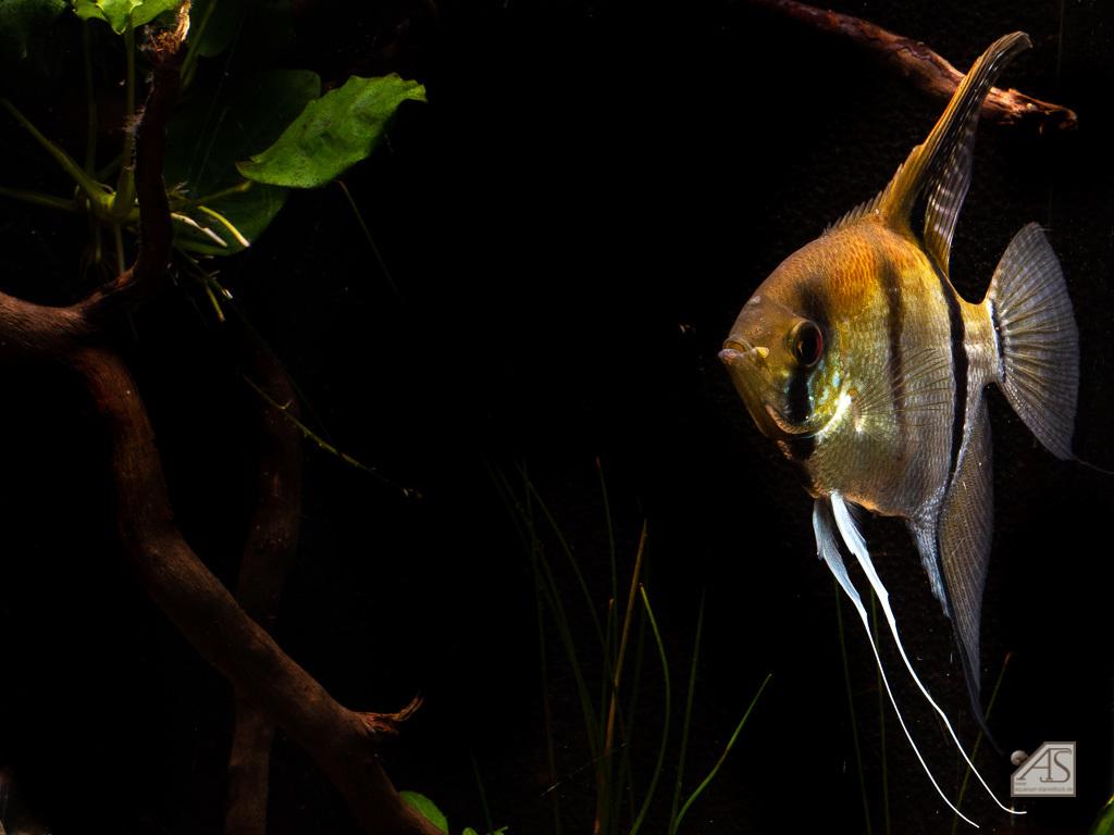 Aquarium JPL-5315