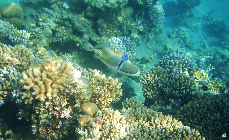 701-3eca10de Unique De Couvercle Aquarium Conception