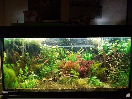 Mein Unterwassergarten