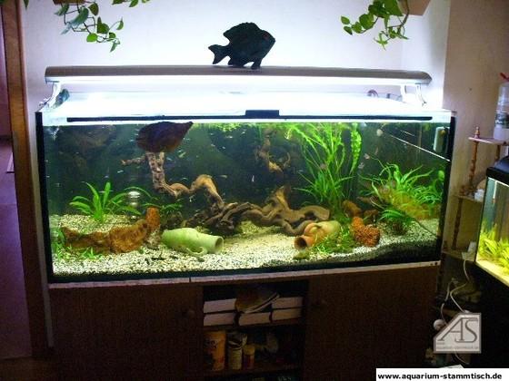 Aquarium 540 Liter 150*60*60 - Ulrich