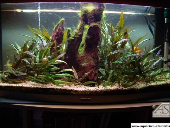 Mein Aquarium - Nasenmann27
