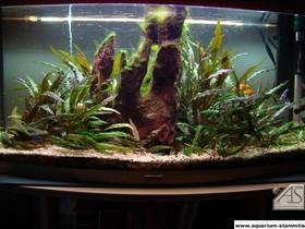1_aquarium_forum_1.jpg