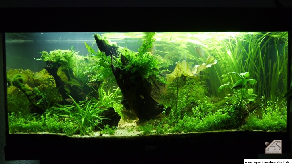 Mein Aquarium sep.2011 gross - olek