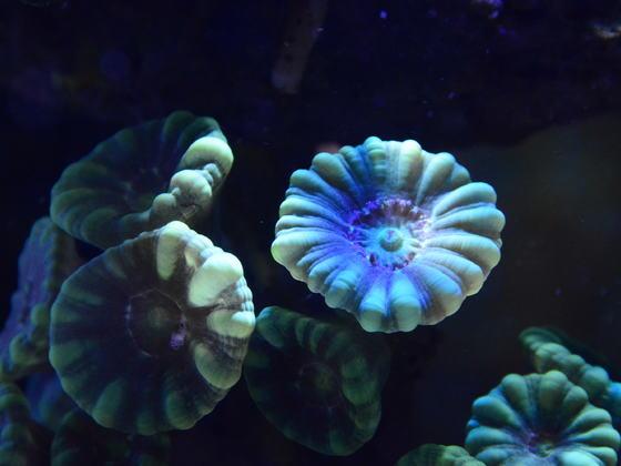 Meerwasserimpressionen