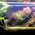 Mein Aquarium, 42 Tage