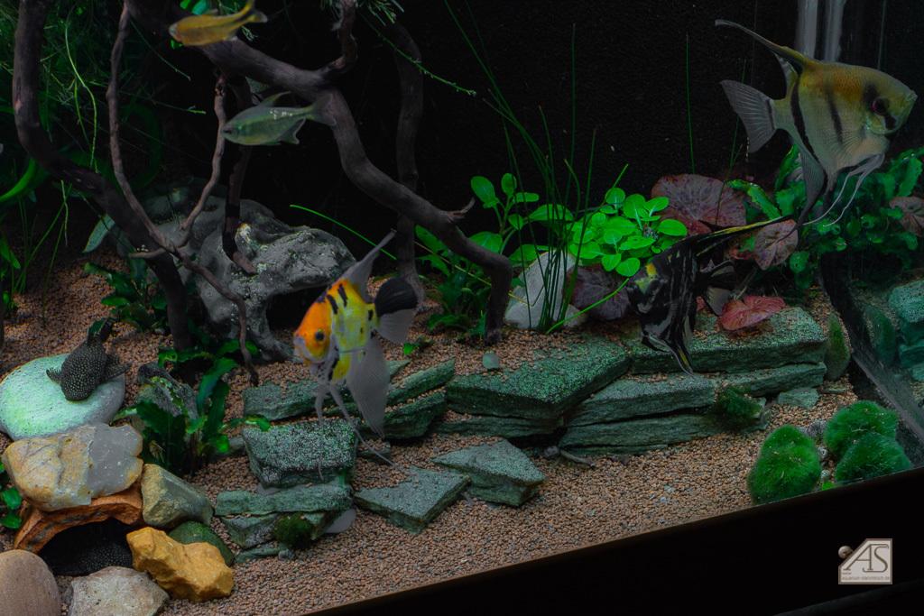 Aquarium JPL-5352