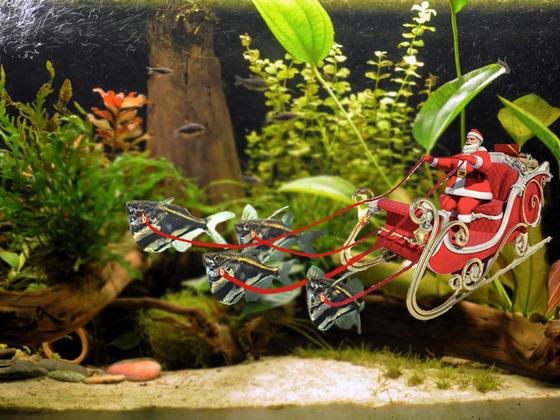 Rentierfisch