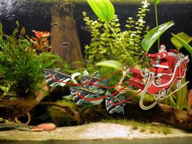 Rentierfisch.jpg