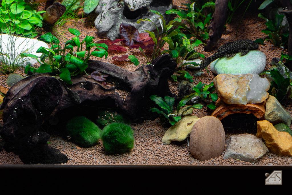 Aquarium JPL-5359