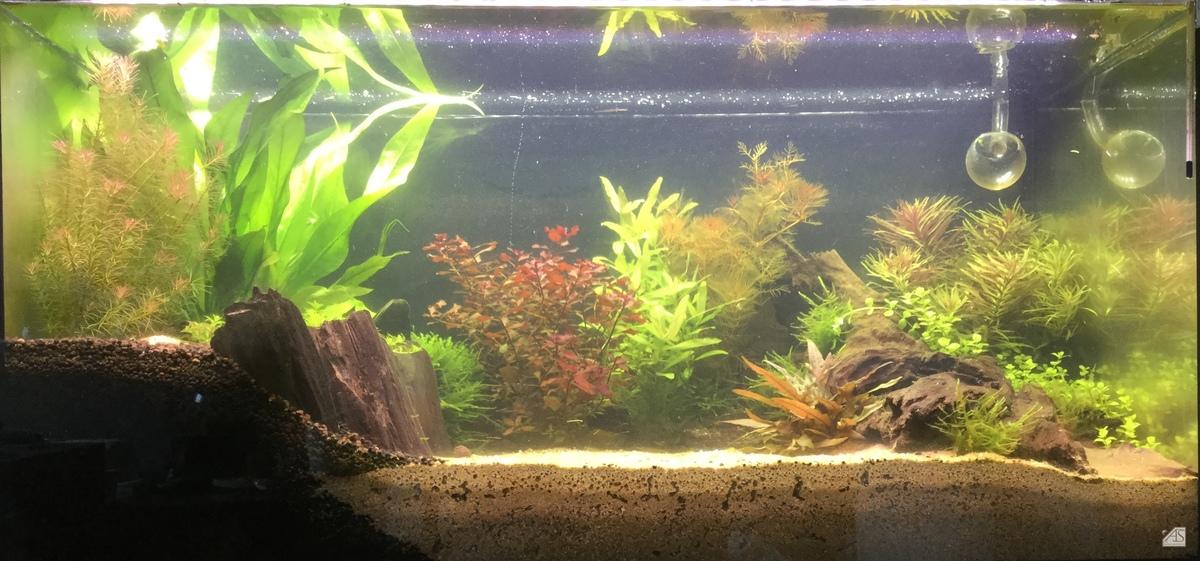 Aquarium 22.05.18