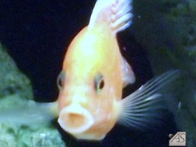 Fisch2.jpg