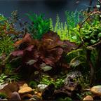 Aquarium JPL-5337