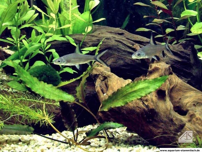 Haibarben im Gesellschaftsbecken! (Sonny1603)