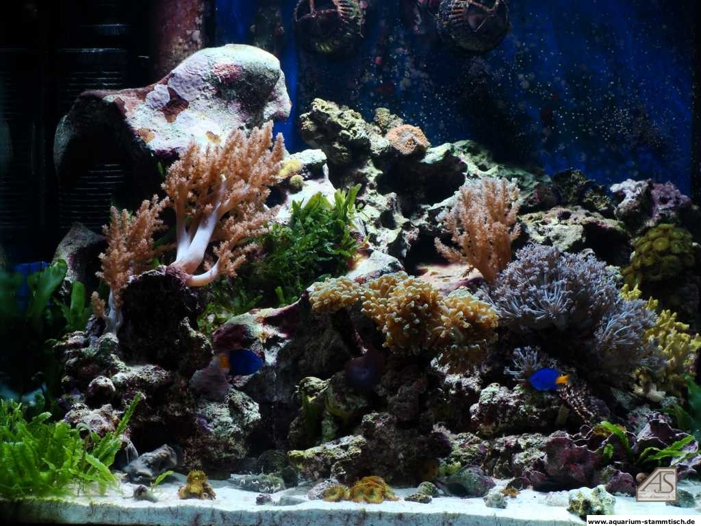 60er Meerwasser-Würfel - Frankma