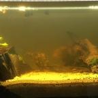 Aquarium 20.04.18