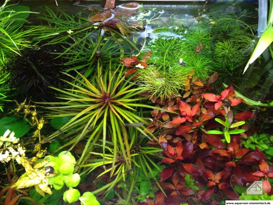 Pflanzen - gergs