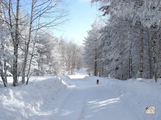 Winterlandschaft von Anton - keine Verlosungsteilnahme :-)