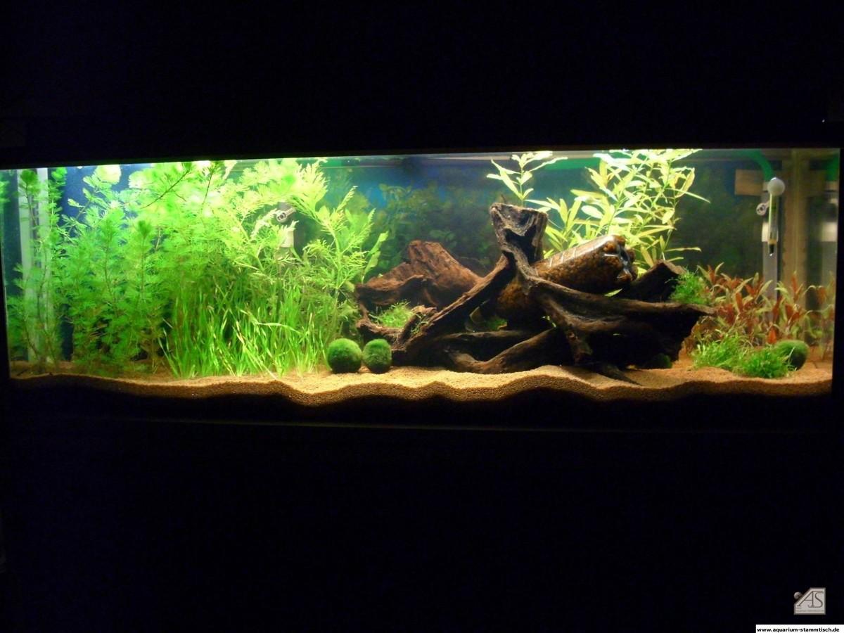 Mein Aquarium vom 28.03.2008 - 5Uhrteefix