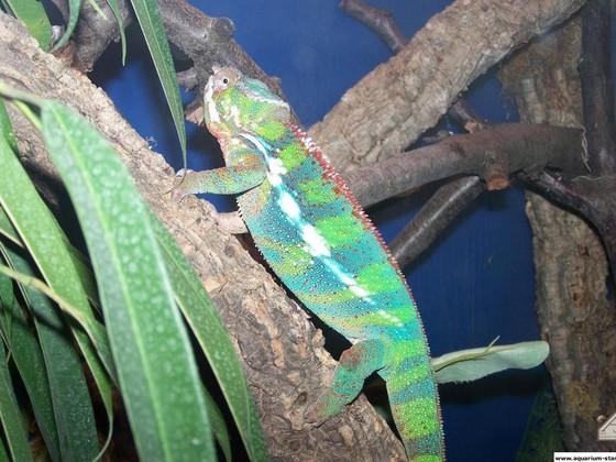 Reptilien im Zoogeschäft (Welt der Tiere)
