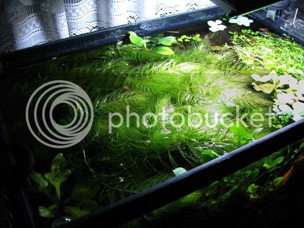wie entwickelt sich dein fast technikfreies becken aquaristik sonstiges aquarium stammtisch. Black Bedroom Furniture Sets. Home Design Ideas